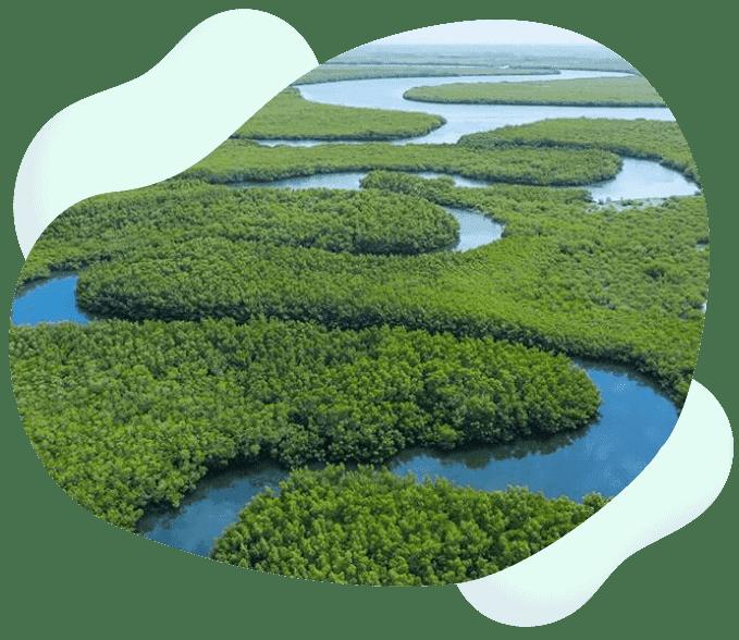 contribution-neutralite-carbone-pour-la-planete-rse
